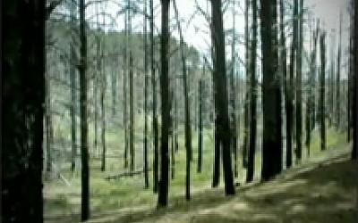 Γίνε φίλος μ΄ ένα δέντρο - Τα δέντρα πονάνε όταν καίγονται